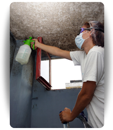 mold removal Cleveland